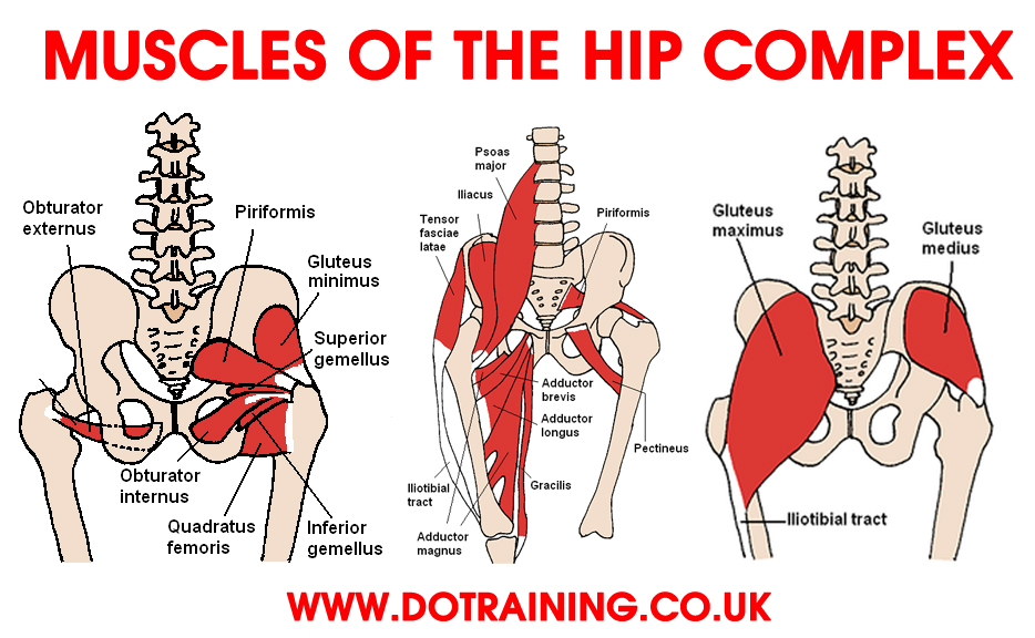 6 Steps to Correcting Hip Flexor Pain | Balance In Motion